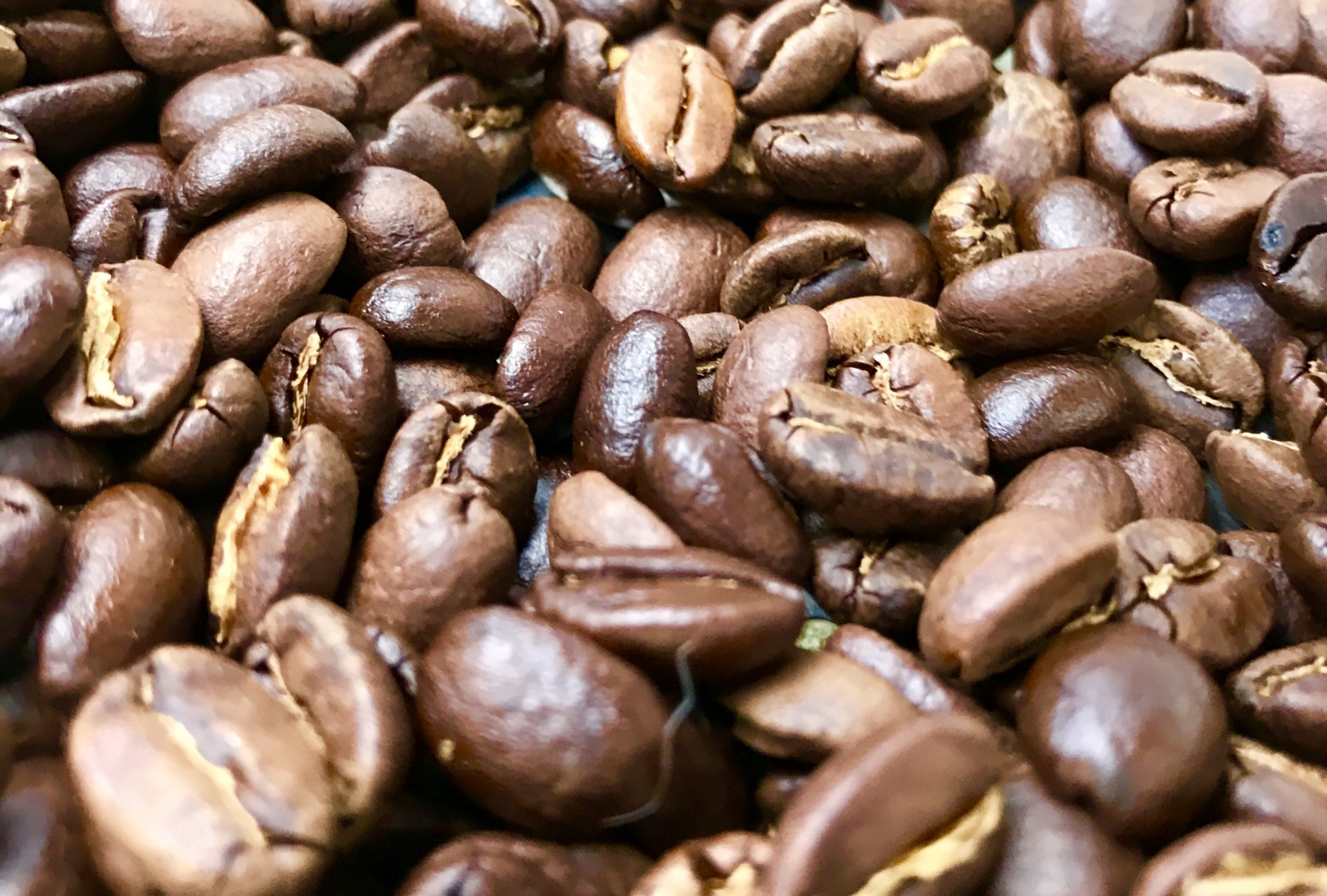 Freshly roasted coffee beans from central Mexico.