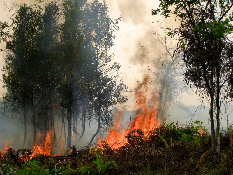 """Forest Fire"" by CIFOR is licensed under CC BY-NC-ND 2.0"